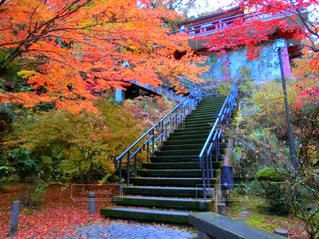 秋の紅葉の写真・画像素材[3155313]