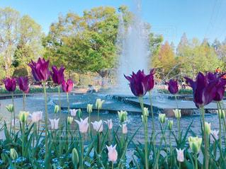 自然,空,花,春,屋外,チューリップ,鮮やか,樹木,噴水,ガーデン,ブルーム,フローラ