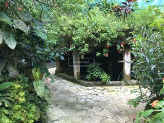 庭の緑の植物の写真・画像素材[3158590]