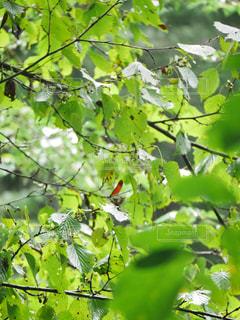 木の枝の虫の写真・画像素材[3167417]
