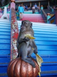 野生の猿の写真・画像素材[4025762]