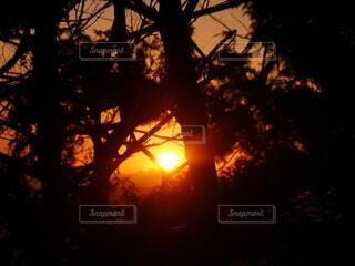 自然,太陽,朝日,オレンジ,正月,朝,お正月,日の出,早朝,新年,初日の出,山登り,登頂