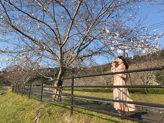 女性,風景,空,桜,屋外,花見,人,フェンス