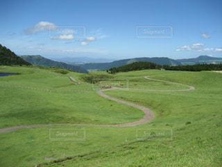 緑,草原,山,草,新緑,高原