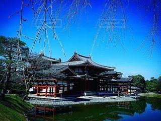 空,京都,水面,樹木,寺,古都,宇治