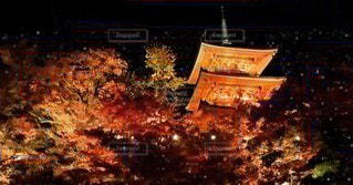 夜,紅葉,夜空,京都,樹木,ライトアップ,寺,古都