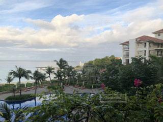 空,夏,沖縄,ヤシの木