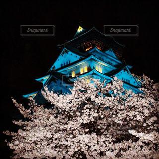 城,夜桜,ライトアップ