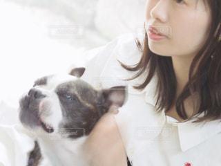 犬の写真・画像素材[3157807]