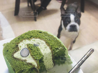 ケーキと犬の写真・画像素材[3171040]