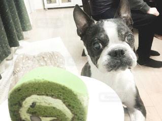 ケーキと犬の写真・画像素材[3171041]