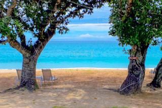 海,絶景,カップル,屋外,ビーチ,水面,海岸,樹木,旅行,バカンス,南の島,プライベートビーチ,バケーション,海外旅行,フィジー,ハネムーン,日陰,眺め