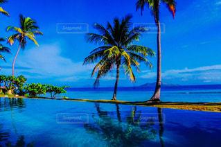 自然,風景,海,ビーチ,プール,水面,海岸,絵画,ヤシの木,南の島,フィジー,離島