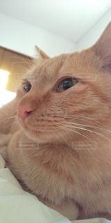 猫,動物,屋内,子猫,朝,モーニング,目,雰囲気,ネコ科の動物