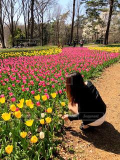 自然,風景,花,春,景色,チューリップ,草,新緑,人,ガーデン