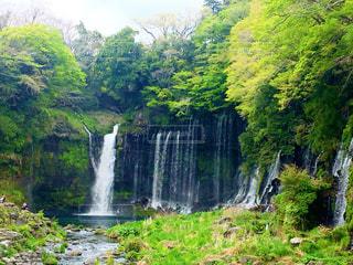 自然,風景,森林,景色,滝,樹木,新緑
