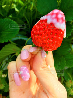 苺,果物,イチゴ