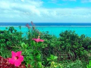 自然,風景,海,空,花,ビーチ,景色,旅行