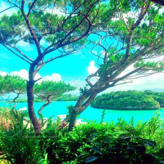 自然,風景,海,空,ビーチ,景色,旅行,草木