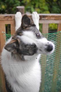 犬,動物,庭,屋外,白,黒,茶色,ペット,可愛い,子犬,愛犬,見つめる,保護犬,雑種,雄犬,もうすぐ1歳