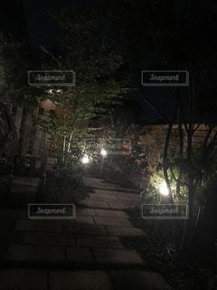 夜,森林,屋外,暗い,美しい,草木,ライトラップ