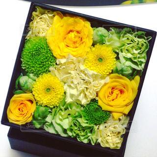 花の写真・画像素材[212861]