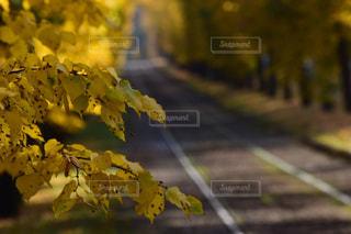 秋,葉,カエデ