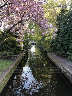 花,春,水面,ガーデン