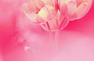 花の写真・画像素材[3571243]