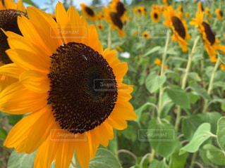 花,夏,屋外,黄色,野外,カラー