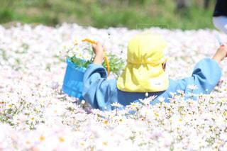 花,花畑,マーガレット,こども,香川,幼稚園児,花摘み,三豊市,フラワーガーデン,フラワーパーク浦島