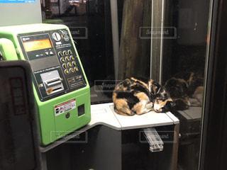 猫,動物,かわいい,居眠り,ねこ,野良猫,まんまる,三毛猫,公衆電話,ネコ,寒さしのぎ
