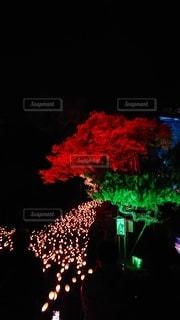夜,夜景,ライトアップ,竹,竹灯籠