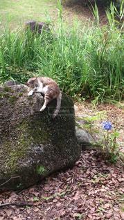猫,公園,動物,にゃんこ,屋外,草,石