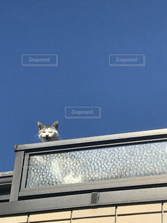 猫,空,動物