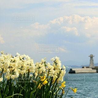 自然,風景,海,空,花,風,水仙,灯台,草木