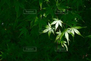 緑の植物のクローズアップの写真・画像素材[3205129]