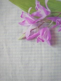 紫チェック✨の写真・画像素材[3171216]