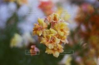 自然,花,春,鮮やか,背景,草木,ボカシ,美しい花