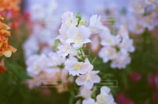 自然,花,春,白,花びら,草木,ガーデン,ボカシ,美しい花