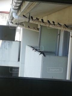 鳥,学校,ツバメ