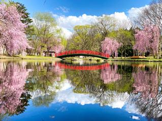 水面に映る桜と桟橋の写真・画像素材[3164355]