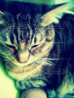 猫,動物,眠い,ネコ科の動物