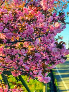 自然,花,春,樹木,道端,カラー,帰り道,草木,ブロッサム