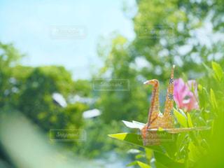 飛び立つ折り鶴の写真・画像素材[3197787]