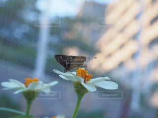 花に止まっている蝶々の写真・画像素材[3228173]