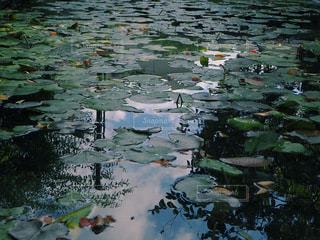 池に映る空の写真・画像素材[3365904]