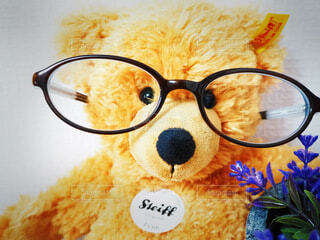 #メガネをかけてみたの写真・画像素材[3680991]