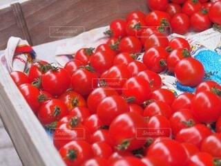 食べ物,トマト,野菜,食品,赤い,プチトマト,食材,フレッシュ,ベジタブル