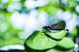 動物,屋外,緑,トンボ,昆虫,畑,とんぼ